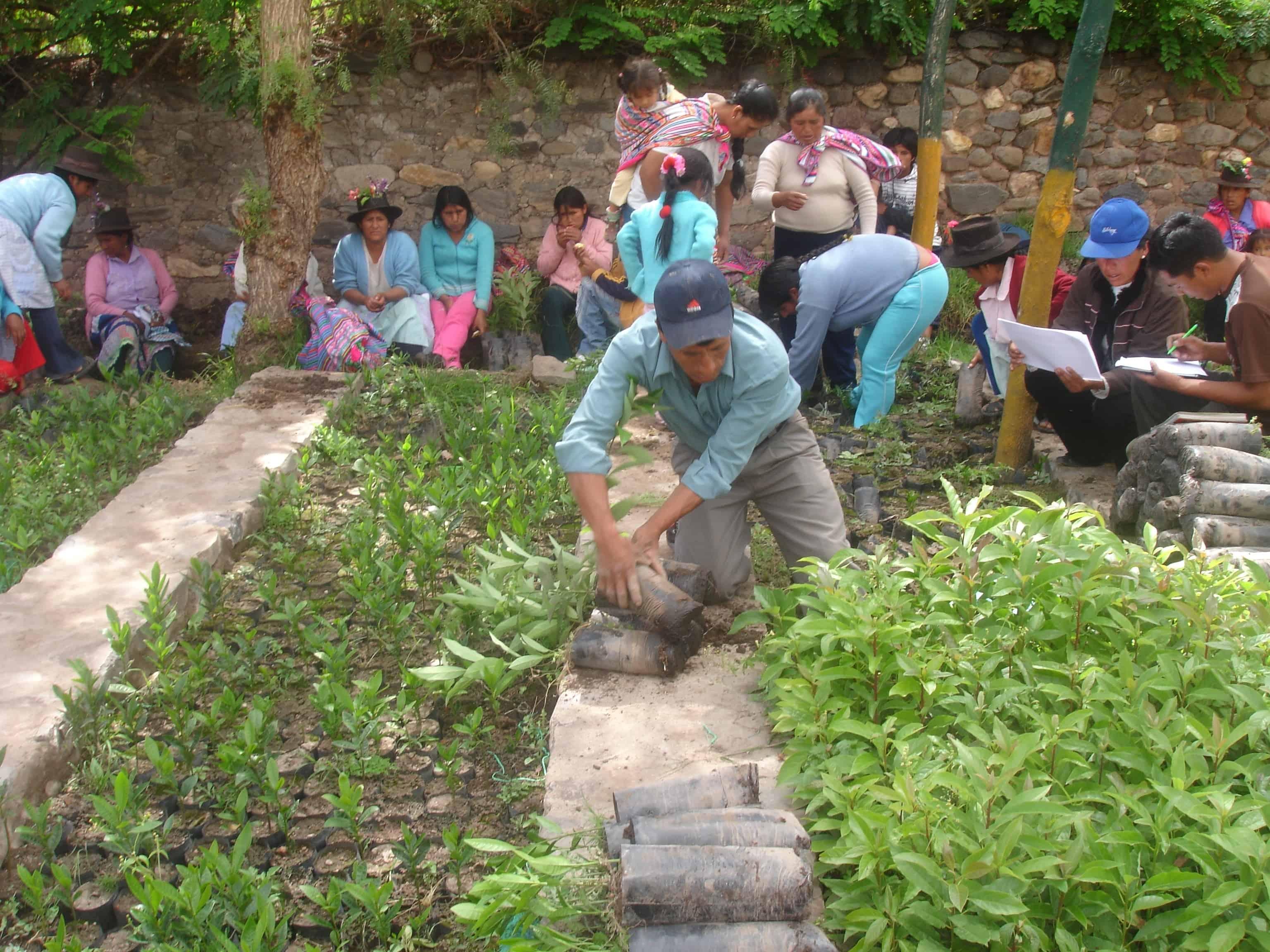 Archive-Peru-Tadepa-5