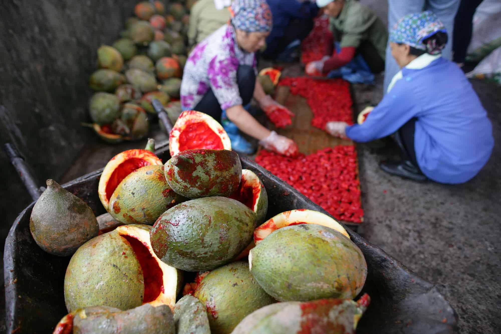Archive-Vietnam-Oxfam-3